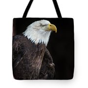 Bald Eagle Intensity Tote Bag