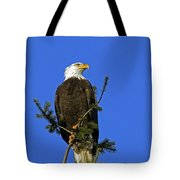 Bald Eagle On Blue Tote Bag