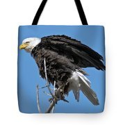 Bald Eagle On Cottonwood Tree Branches Tote Bag