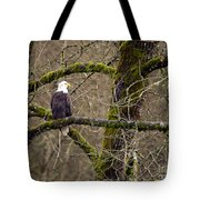 Bald Eagle On Mossy Branch Tote Bag