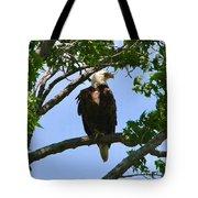 Bald Eagle On Watch Tote Bag