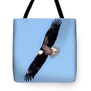 Bald Eagle Overhead  Tote Bag