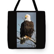 Bald Eagle Perched On Branch On A Windy Day Tote Bag