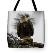 Bald Eagle Protecting His Fish Tote Bag