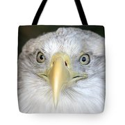 Bald Eagle Up Close Tote Bag