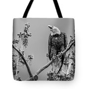 Bald Eagle Warning In Black And White Tote Bag
