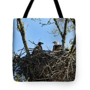 Bald Eagle With Chick In Nest 031520169849 Tote Bag