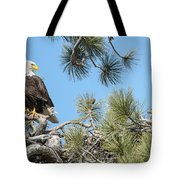 Bald Eagle With Nestling Tote Bag