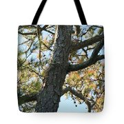 Bald Head Tree Tote Bag