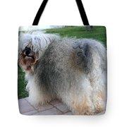 ball of fur Havanese dog Tote Bag