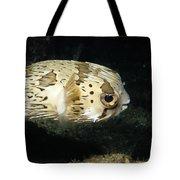 Balloonfish Profile Puffer Fish, Diodon Tote Bag
