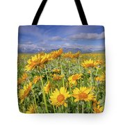 Balsam On The Rocky Mountain Front Tote Bag