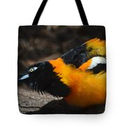 Baltimore  Oriole 2 Tote Bag