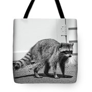 Bandit In Broad Daylight Tote Bag