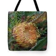 Banksia Nivea - 2 Tote Bag