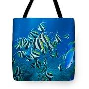 Bannerfish School Tote Bag