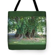 Banyon Tree Tote Bag