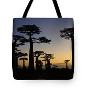 Baobab Forest At Sunset Tote Bag