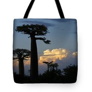 Baobabs And Storm Clouds Tote Bag