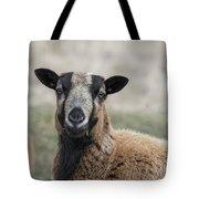 Barbados Blackbelly Sheep Portrait Tote Bag