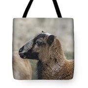 Barbados Blackbelly Sheep Profile Tote Bag