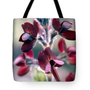 Barbed Thermopsis Or Black Pea Tote Bag