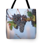 Barbera Grapes Ready For Harvest South Tote Bag