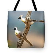 Bare-faced Go-away-birds Corythaixoides Tote Bag