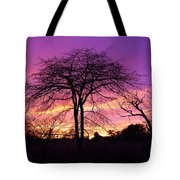 Bare Trees In Gorgeous Sunset Tote Bag