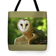 Barn Owl-6553 Tote Bag
