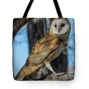 Barn Owl Framed In Cottonwood Tote Bag