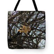 Barn Owl In A Tree Tote Bag