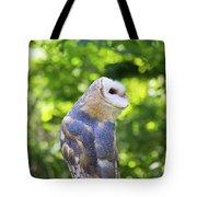 Barn Owl Looking Skyward Tote Bag