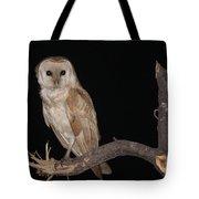 Barn Owl Tyto Alba Tote Bag