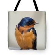Barn Swallow Perched On A Fence Watching Tote Bag