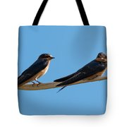 Barn Swallows  Tote Bag