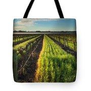 Barossa Vineyard Morning Tote Bag