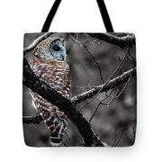 Barred Owl Hungry  Tote Bag