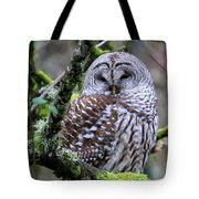Barred Owl In Tree Tote Bag