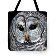 Barred Owl Portrait Tote Bag