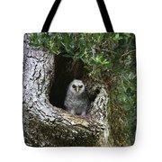Barred Owlet Tote Bag