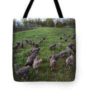 Barred Plymouth Rock Chickens Free Tote Bag