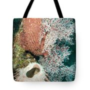 Barrell Sponges And Sea Fans Tote Bag