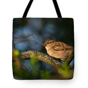 Basking In The Morning Light Tote Bag