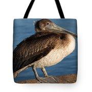 Basking Pelican Tote Bag