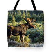 Basking In The Morning Sun Tote Bag