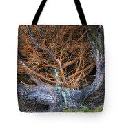 Battered Cypress With Orange Alga Tote Bag