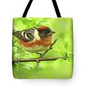 Bay-breasted Warbler Tote Bag