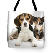 Beagle And Calico Cat Tote Bag