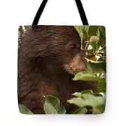 Bear Cub In Apple Tree3 Tote Bag